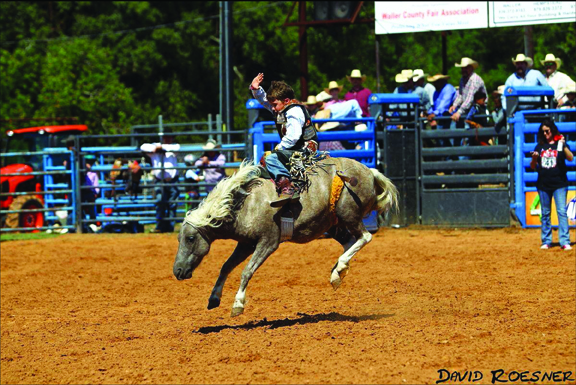 Mid-South Horse Review